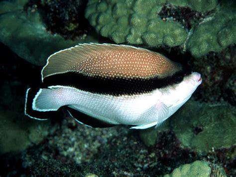 Pancing Ikan Termahal oh joran ikan yang cun melecun