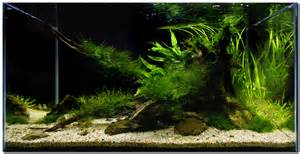 aquascape of the month november 2009 quot riverbank