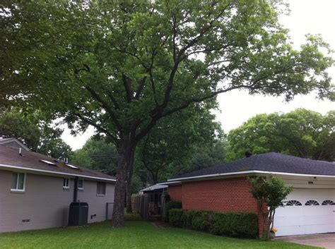 the branch house homeowner tree responsibility with overhanging branches