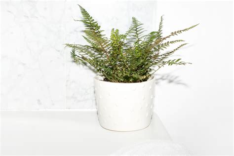 Shower Plants by 11 Plants For Bathrooms That Feel Spa Worthy Into The Gloss