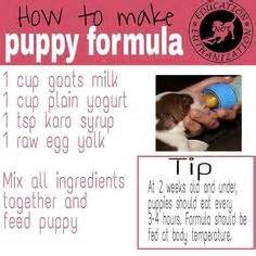 emergency puppy formula a birth certificate for a puppy or of puppies