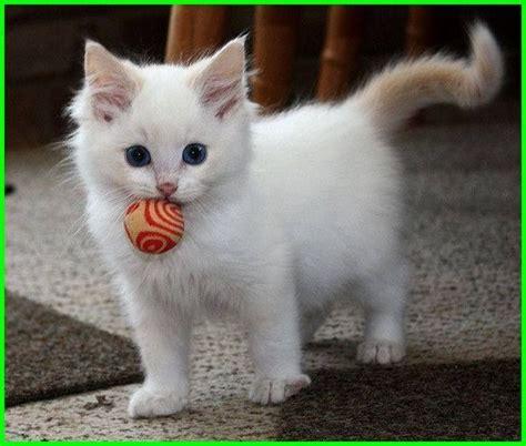 gambar kucing lucu imut   menggemaskan sedunia