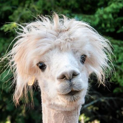 does bed head test on animals 50 best images about bed head hair on pinterest bedhead