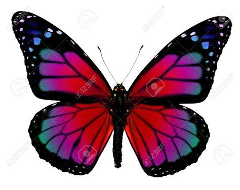 imagenes con mariposas mariposas monarcas moradas buscar con google mariposas