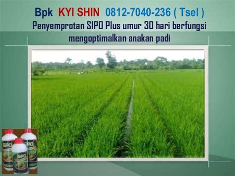 Pupuk Organik Di Grow Untuk Padi 0812 7040 236 tsel cara buat pupuk cair pupuk di