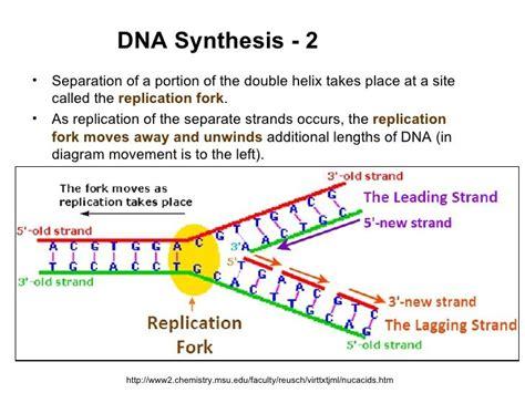 dna replication process diagram image result for dna replication fork diagram genetics