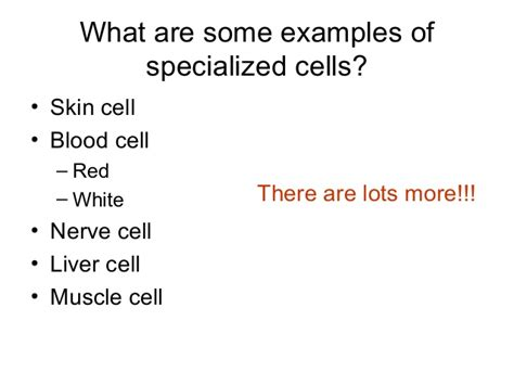archive specialized cells in epidermis