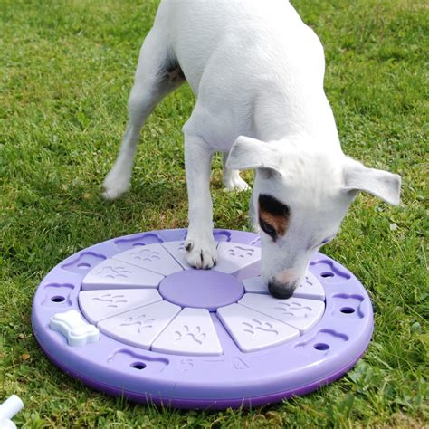 dog house games 5 ways to keep your dog engaged pet vet
