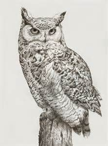 owl drawing best images collections hd for gadget
