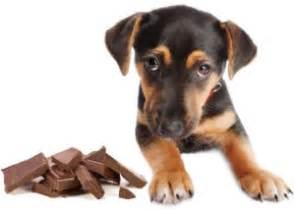 can dogs eat white chocolate does chocolate really kill dogs siowfa15 science in our world certainty and
