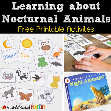 printable nocturnal animal book learning about nocturnal animals free printable activities