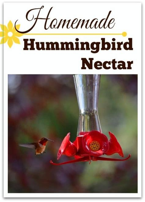 1000 ideas about hummingbird food on pinterest