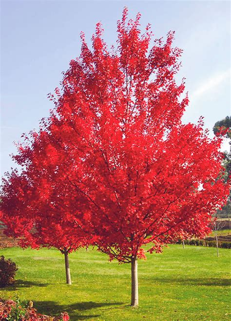 5 easy ways to bring color to your landscaping this fall sharp lawn inc fayette