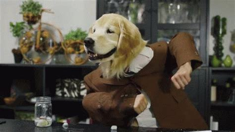 happy puppy gif happy gif find on giphy