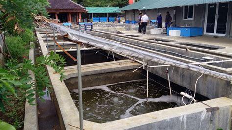 Bibit Ikan Nila Kendal ada pembesaran sidat di bogor bebeja