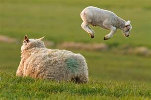 animals pictures take a look at these amazing airborne animals