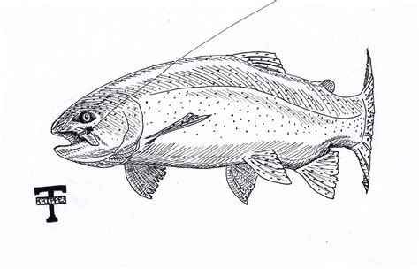 free coloring pages of rainbow trout