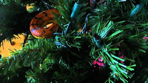 christmas tree corn snake fun youtube
