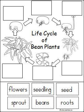 best 20 life cycle of plants ideas on pinterest plant