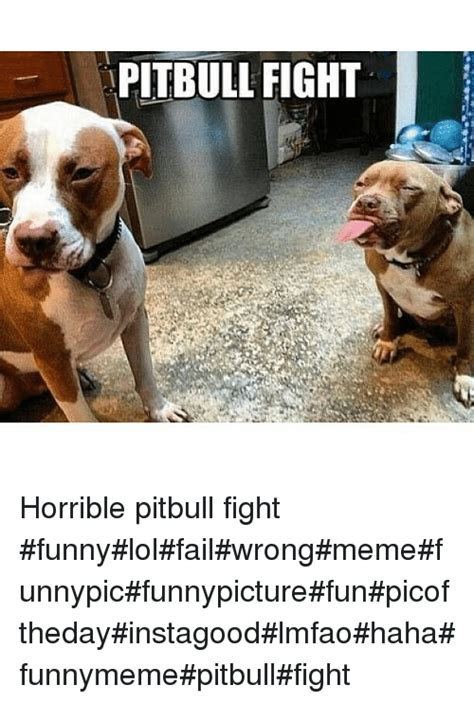 Pitbull Memes - pin pitbull memes best collection of funny pictures on