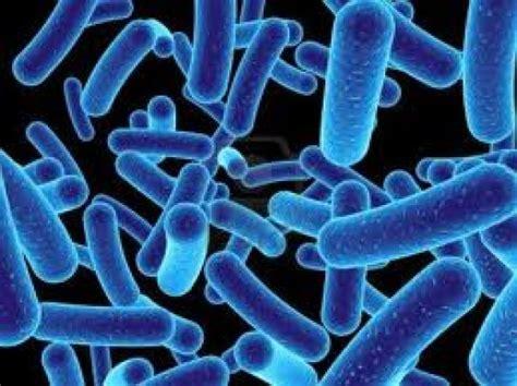 Agen Starbio Plus mikroba pengurai starbio plus agen starbio