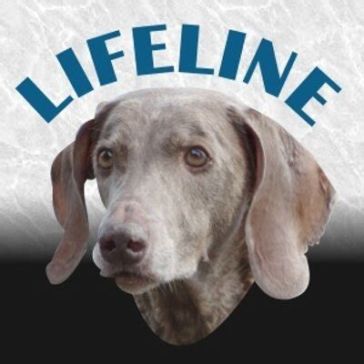 lifeline puppy rescue lifeline rescue lifelinedogs