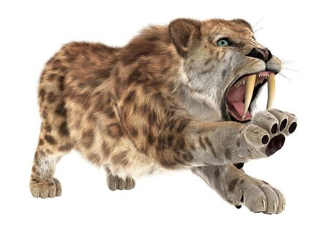 saber tooth tigers tactical thinking  emergency