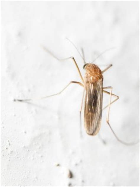 what causes gnats in house how to get rid of gnats in the house 5 ways bob vila
