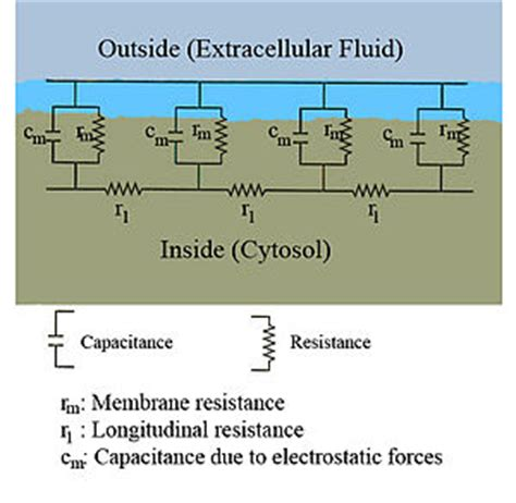 capacitor resistance cable theory