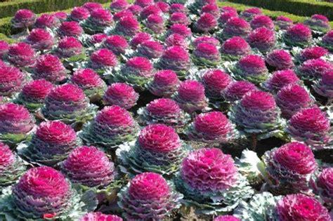 ricanti fioriti resistenti al freddo piante bombonierashop news
