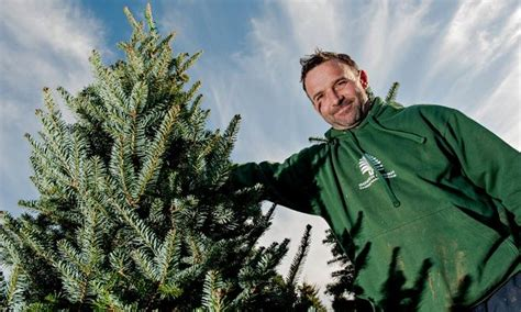 christmas tree growers get ready for the fir to fly
