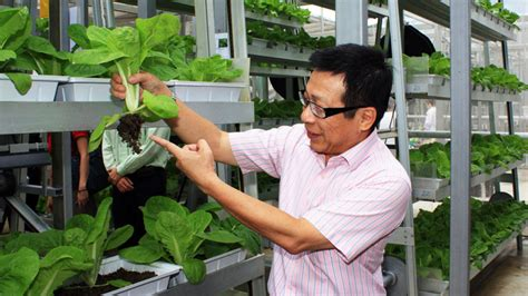 sky high vegetables vertical farming sprouts  singapore