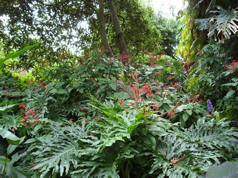 Tropical Garden Plants by Tropical Garden Wallpapers Pictures Of Tropical Plants