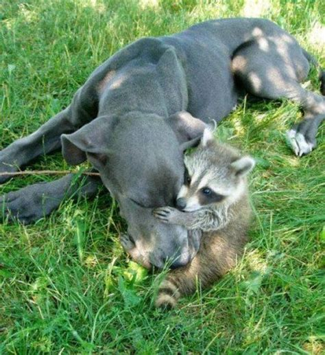 Cruelty Unjust 17 best images about best friends on