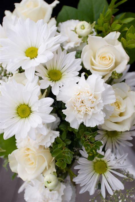 immagini fiori bianchi fiori bianchi e verdi immagine stock immagine di