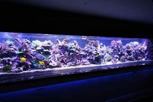 led beleuchtung meerwasseraquarium coral gallery orphek reef aquarium led orphek