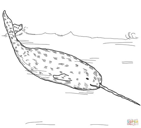 arctic whale narwhal coloring page free printable
