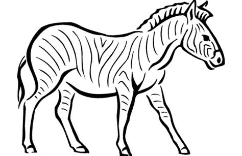 printable pictures of zebra to color 40 zebra templates free psd vector eps png format