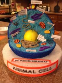 3d animal cell project from yummy jelly