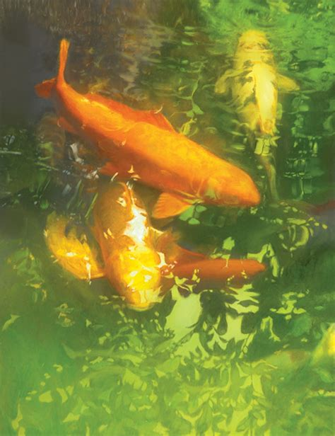 painting the koi pond trade magazine