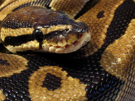 python heat l scale l info serpent