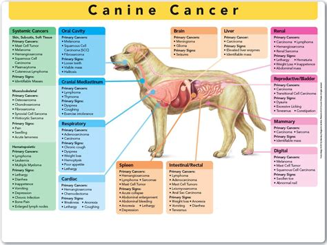 symptoms of lung cancer in dogs pet health pah news pioneer animal hospital