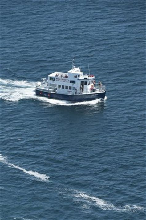 mullowney s boat tours o brien s whale and bird tours inc bay bulls