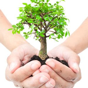 tree plant plant a tree this arbor month
