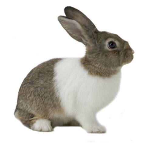 Harga Makanan Kelinci Anggora 84 kelinci 32 jenis kelinci yang wajib anda tau