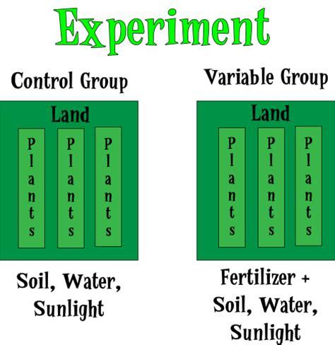 design experiment control experiments amoebamike