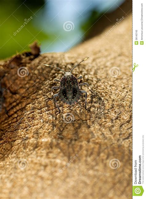 bug tree unlimited stink bug on a tree stock photos image 36140743