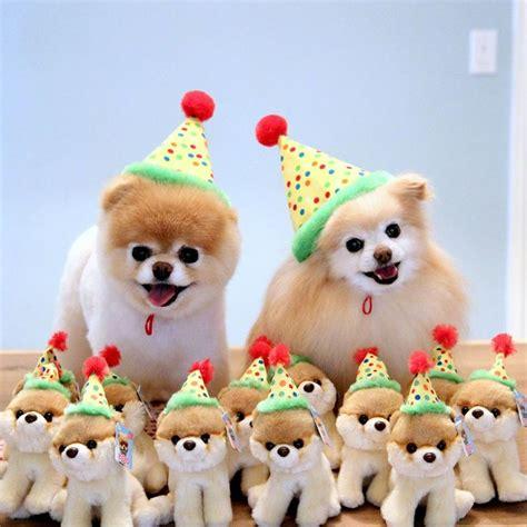 happy birthday pomeranian 54 best pomeranian birthday images on pomeranians happy birthday and