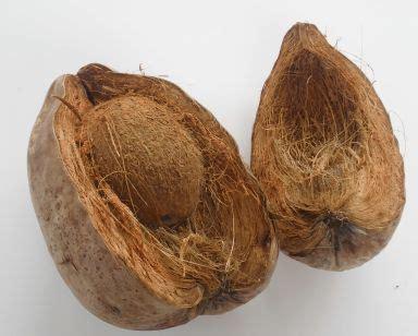 die gartenscheune die gartenscheune kokosprodukte