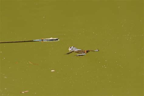 zoologischer garten berlin erdmännchen zeitachse tier fotos eu